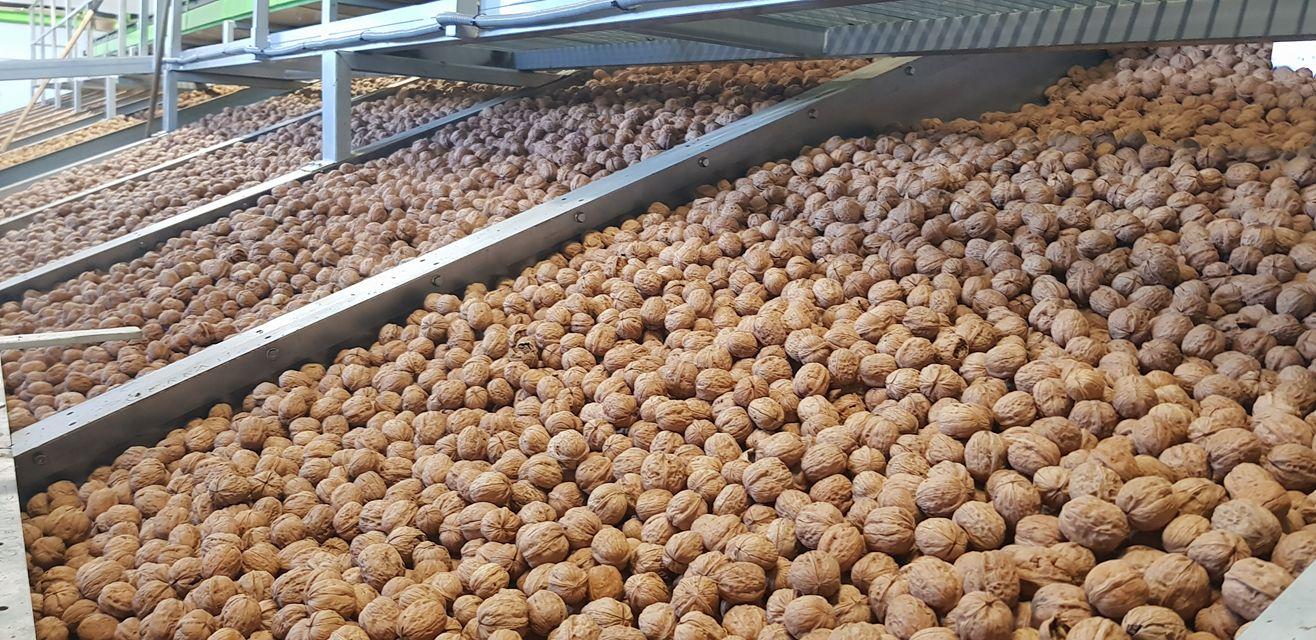 nueces españolas productor de nuez españa venta online comprar futos secos