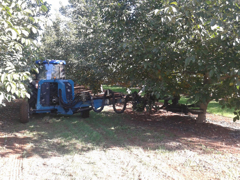 Almendras Nogales y cosecha propia Si desea más información de nuestro vivero visite nuestra web especializada