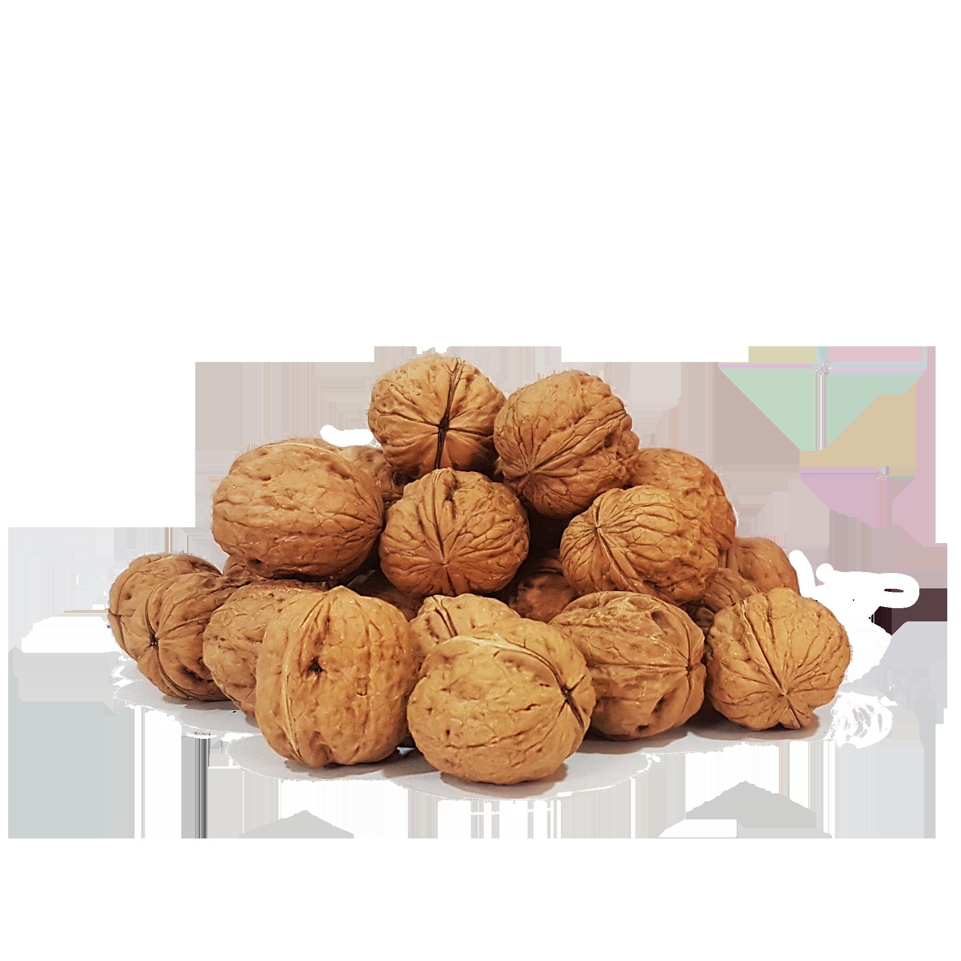 Productores de nueces españolas. Productor de nueces