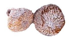 Higos secos frutos secos comprar online España (2)
